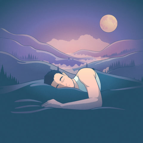 The states of sleep